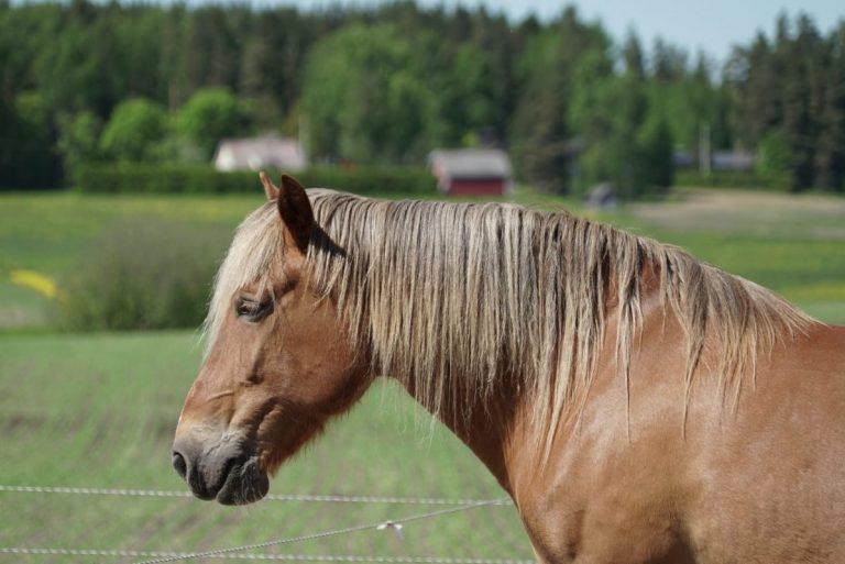 Hevonen Pieni Kotieläintila